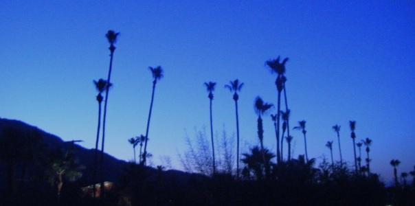 palms-top1